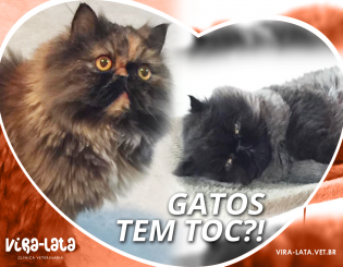 Gatos e o TOC