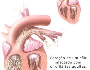 ProHeart – a prevenção anual contra o verme do coração canino
