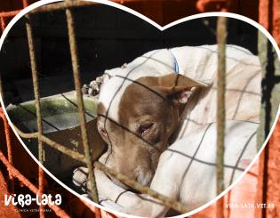 Vidas aprisionadas em cachorrários – O Indaialense