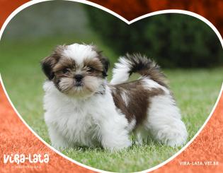 Estudo dos Casos de Dermatite Atópica Canina – TCC