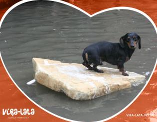 Abandono de animais nas enchente – O Indaialense