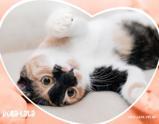Primovacinação ou Vacinação Inicial de Gatos