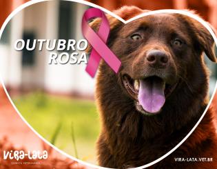 OUTUBRO ROSA – CÃES E GATOS