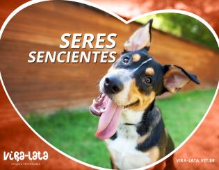 Cães e Gatos como Seres Sencientes – O Indaialense