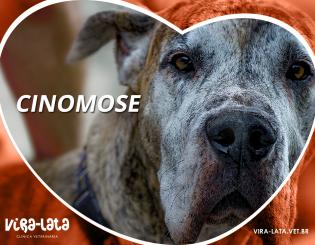 Cinomose: a nesfata doença canina