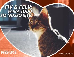 FIV E FeLV – Um problema oculto em muitos gatos.