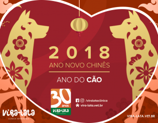 Ano Novo Chinês – Ano do Cão | Cachorro de Terra