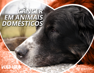 Quimioterapia em Mascotes – Câncer em Animais Domésticos