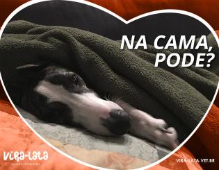 Cães podem dormir na nossa cama?