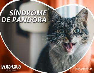 Gatos e a Síndrome de Pandora