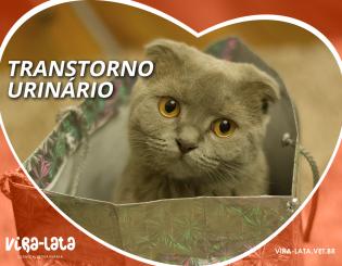 Friagem na bobagem – transtornos urinários nos gatos