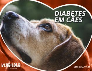 Diabete em cães?