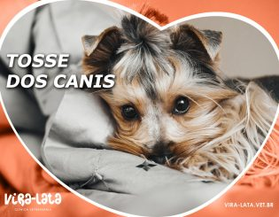 Tosse dos Canis – Gripe canina?