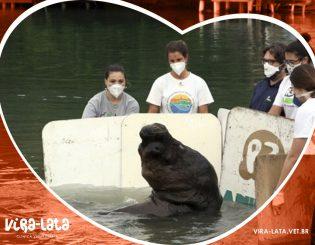 Leão-marinho encontrado em Florianópolis